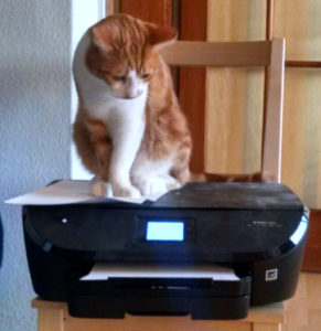 Dexter is a cat who is rather confused by a printer